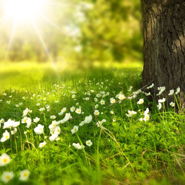 7 פעילויות קשיבות בטבע